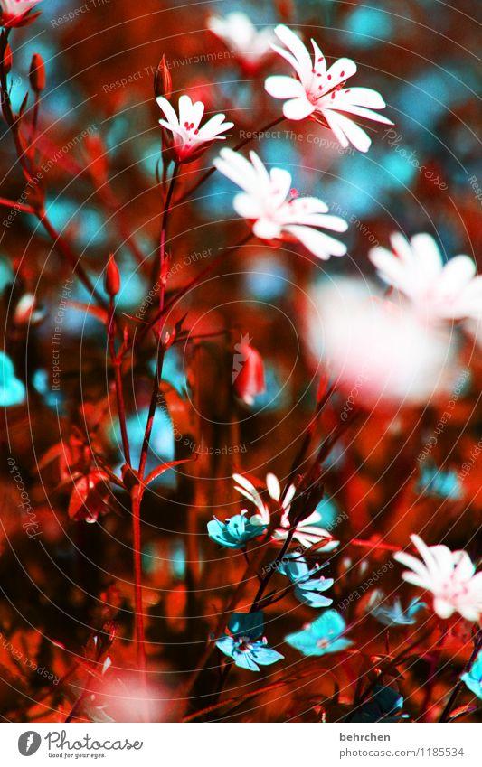 natürlich unnatürlich Natur Pflanze Frühling Sommer Schönes Wetter Blume Gras Blatt Blüte Wildpflanze Veronica sternmiere Garten Park Wiese Feld Blühend Duft