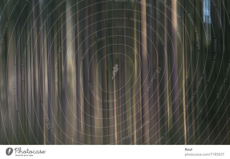 Wald Natur Baumstamm dunkel braun grün Bewegung abstrakt Unschärfe Hintergrundbild Surrealismus Farbfoto Gedeckte Farben Außenaufnahme Muster