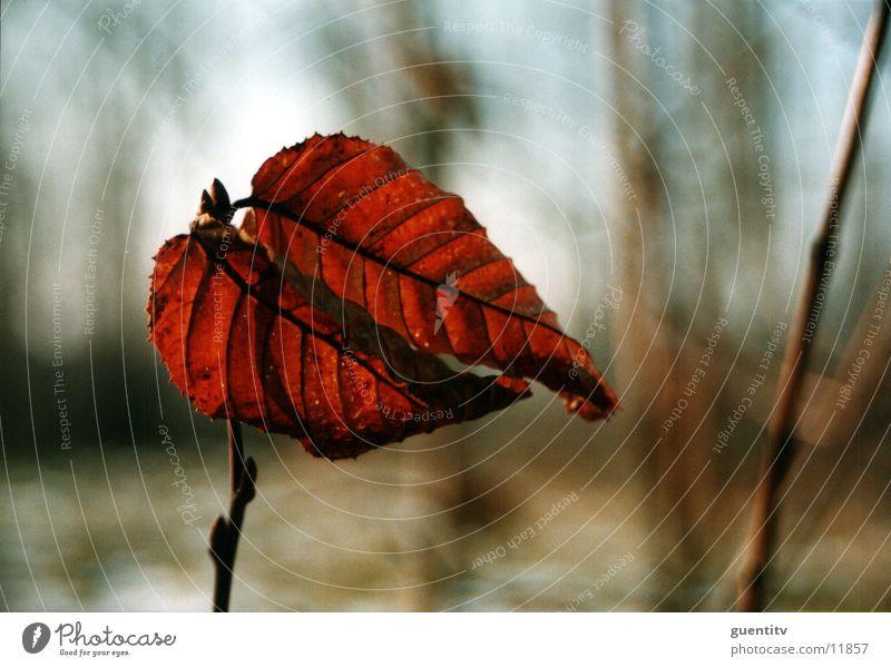 Herbst Natur Blume Pflanze Blatt Landschaft