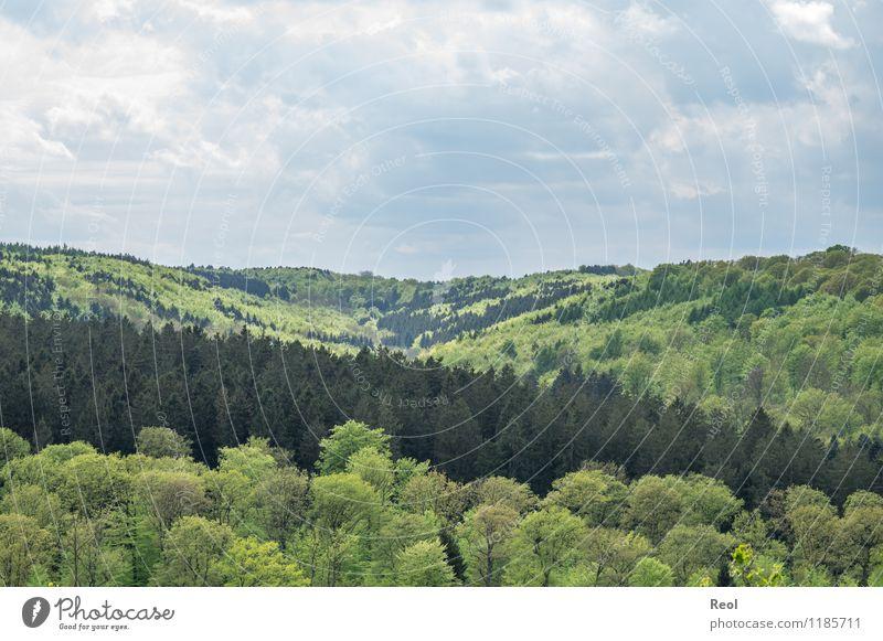 Hell und Dunkel Natur Landschaft Pflanze Erde Himmel Wolken Frühling Schönes Wetter Baum Wildpflanze Buche Tanne Wald Hügel Mischwald Nadelwald Laubwald Tal