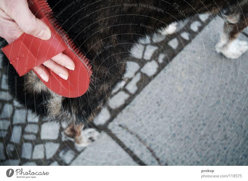 Altenpflege - 1 Hund Hand Körperpflege striegeln Fell Tier grau Frau Mischling Haustier grauhaarig pflegebedürftig Schwäche Trauer Dienstleistungsgewerbe