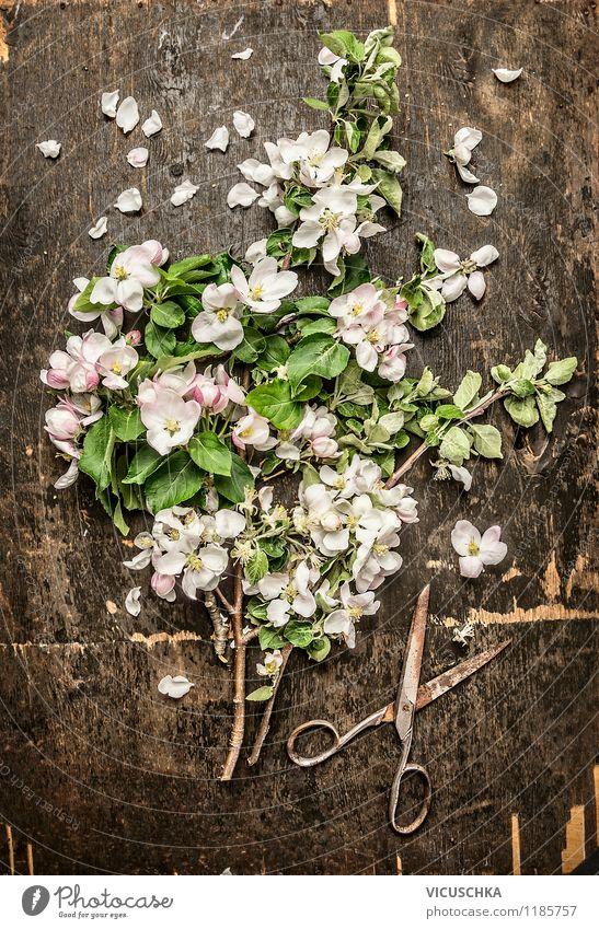 Apfelblüten und alte Schere Natur Pflanze Sommer Baum Blume Blatt dunkel gelb Frühling Blüte Stil Garten Freizeit & Hobby Design Dekoration & Verzierung Tisch