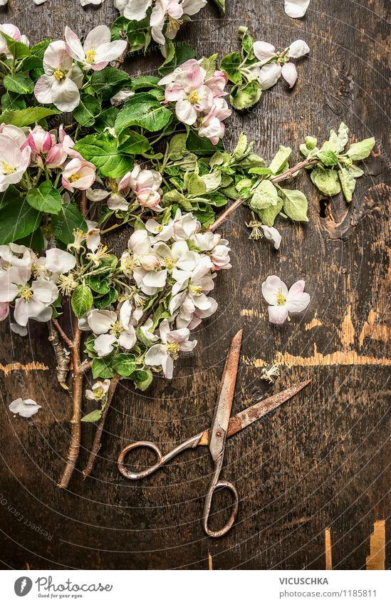 Obstbaum Blüten mit alter Schere Natur Pflanze Sommer Blume Blatt Haus Frühling Stil Hintergrundbild Garten rosa Design Dekoration & Verzierung elegant Tisch