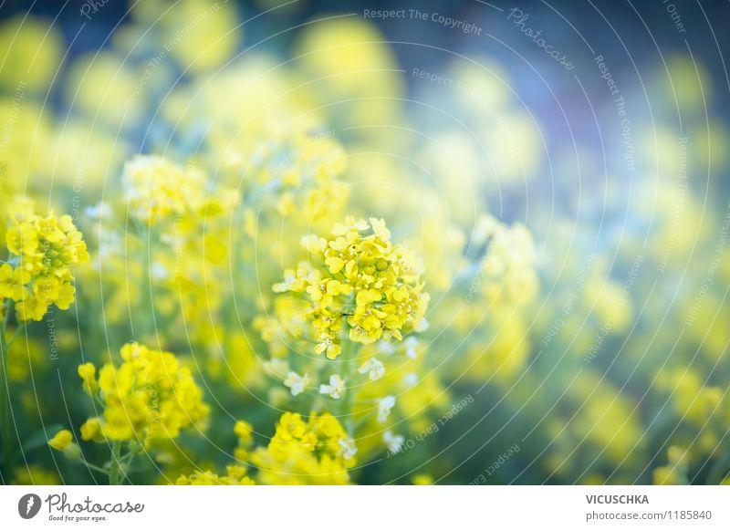 Gelbe Blumen im Garten Stil Design Sommer Natur Pflanze Frühling Herbst Blatt Blüte Park gelb Hintergrundbild abstrakt Außenaufnahme Blumenbeet schön