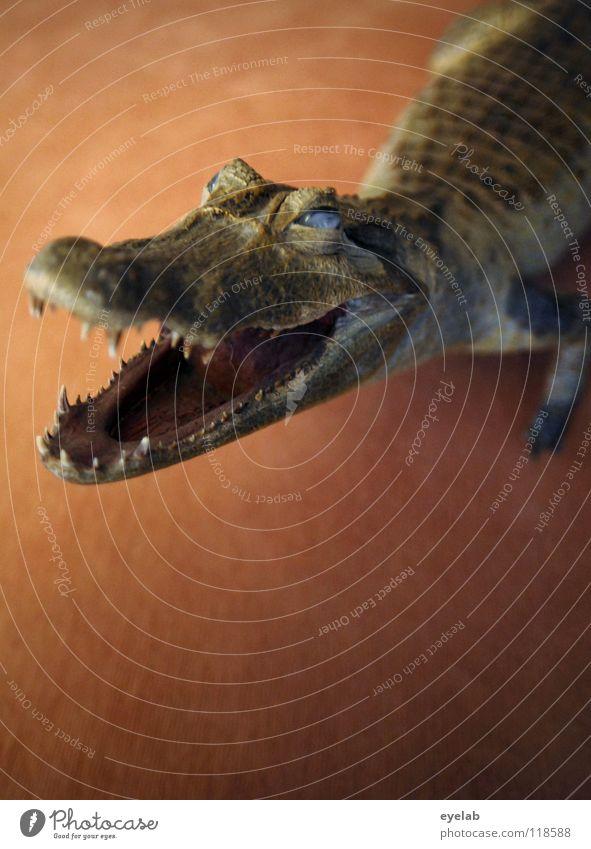 Kein Hund II Krokodil Alligator Tier Teppich Auslegware braun grün Vertrauen Handtasche Ärger Konflikt & Streit Pfote Reptil Haustier Sicherheit Alptraum
