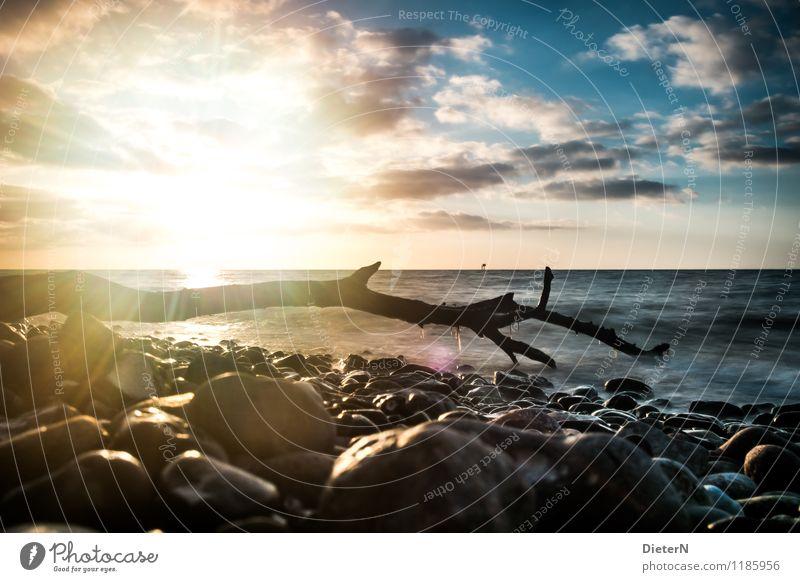 Gegenlicht Umwelt Landschaft Wasser Himmel Wolken Horizont Wellen Küste Ostsee blau gelb schwarz Stein Baumstamm Treibholz Farbfoto Außenaufnahme Menschenleer