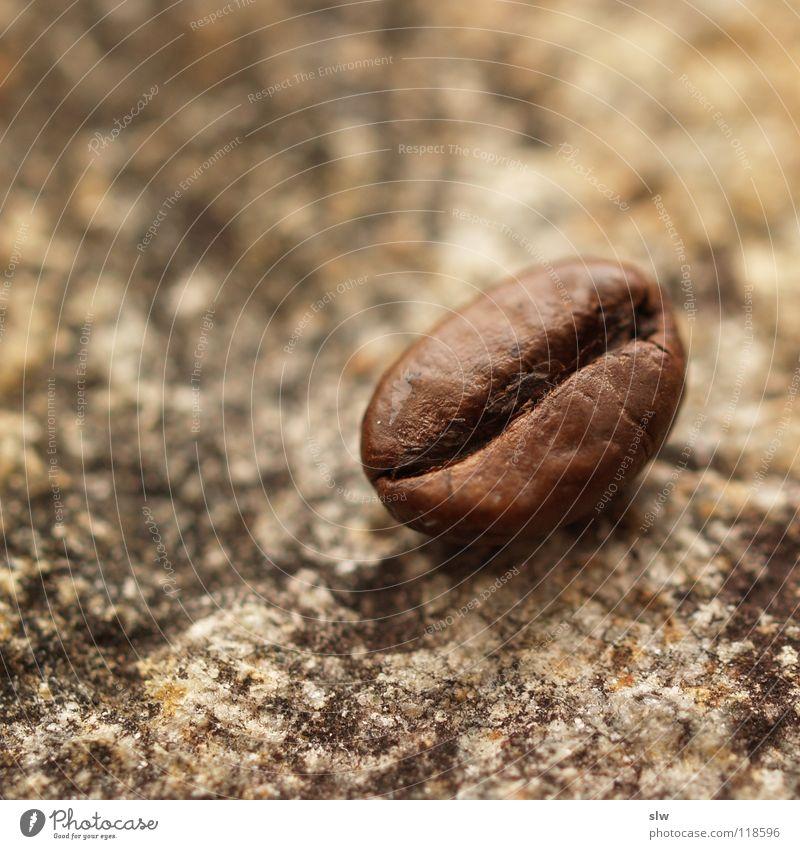 Arabica Stein Kaffee genießen Brasilien Kaffeebohnen Koffein Milcherzeugnisse
