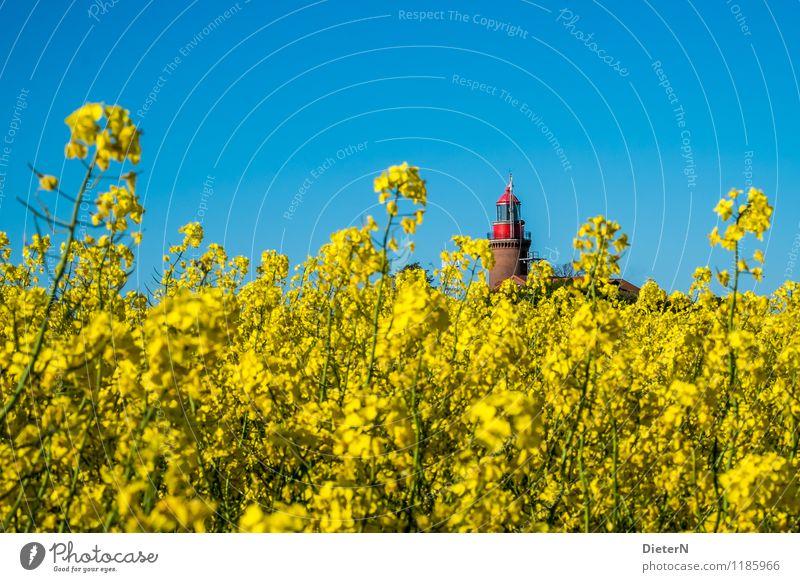herausragend Umwelt Landschaft Pflanze Himmel Wolkenloser Himmel Frühling Schönes Wetter Nutzpflanze Feld Küste Ostsee blau gelb rot Raps Rapsfeld Rapsblüte
