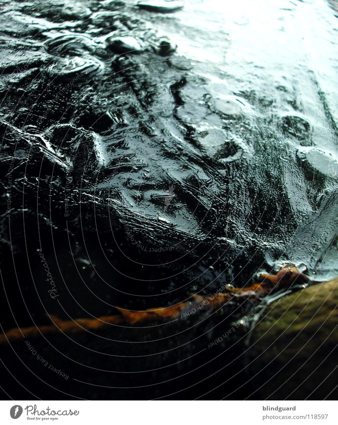 Ice Age Wasser Sommer Winter dunkel kalt Luft hell Eis Feste & Feiern frisch Seil Frost Coolness Klarheit Ast Ewigkeit