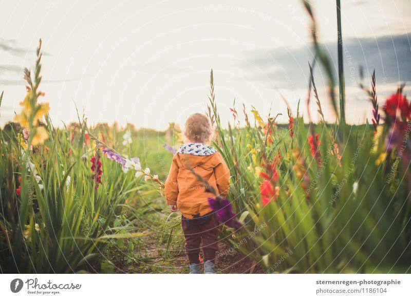 gladiolenkerl Mensch Kind Natur Pflanze Sommer Blume Frühling Wiese Gras Junge Garten Park Feld Kindheit Baby Blühend