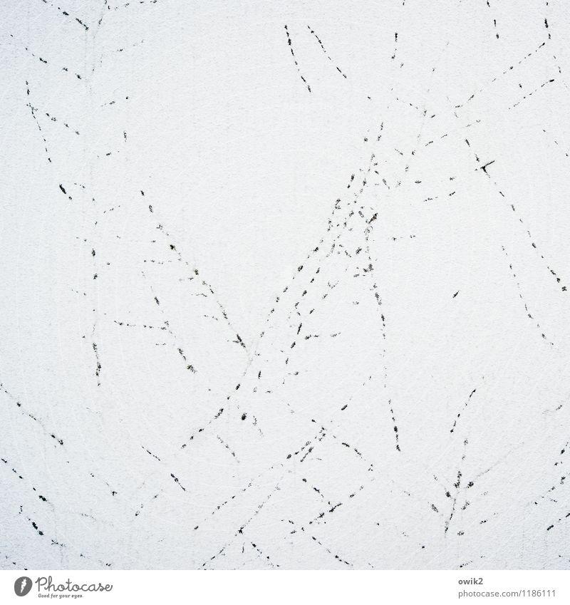 Jabberwocky Pflanze Efeu Rest Spuren Mauer Wand Fassade verputzt Putzfassade dehydrieren alt Zusammensein klein trocken viele verrückt Vergangenheit