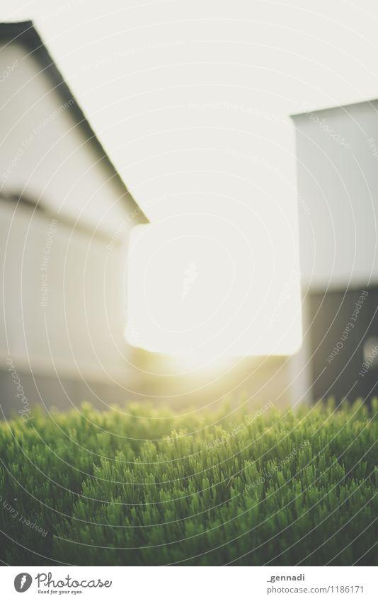 Schlucht Kleinstadt grün Gegenlicht Lavendel Sträucher Haus Stadt Wohngebiet Wärme Sonnenuntergang Einfamilienhaus Farbfoto