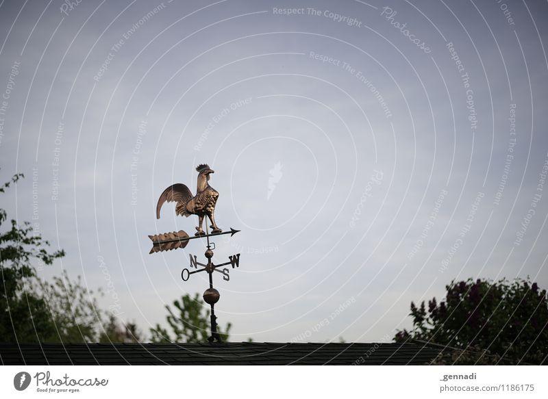 Richtungsweisend Hahn 1 Tier Beratung Wind Windrad Norden Himmelsrichtung Wegekreuz Windrichtung richtungweisend Farbfoto Außenaufnahme Menschenleer