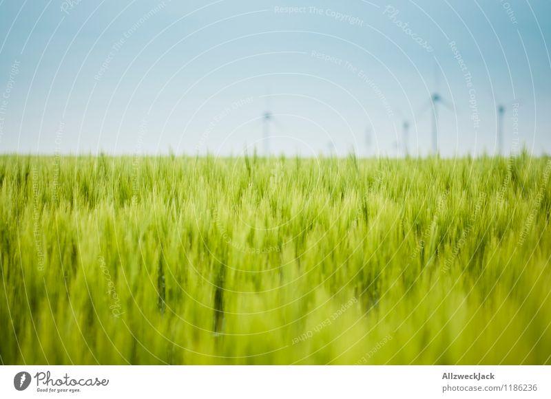 Grünzeug und Energie Energiewirtschaft Erneuerbare Energie Windkraftanlage Natur Wolkenloser Himmel Schönes Wetter Nutzpflanze Getreidefeld Weizen Feld saftig