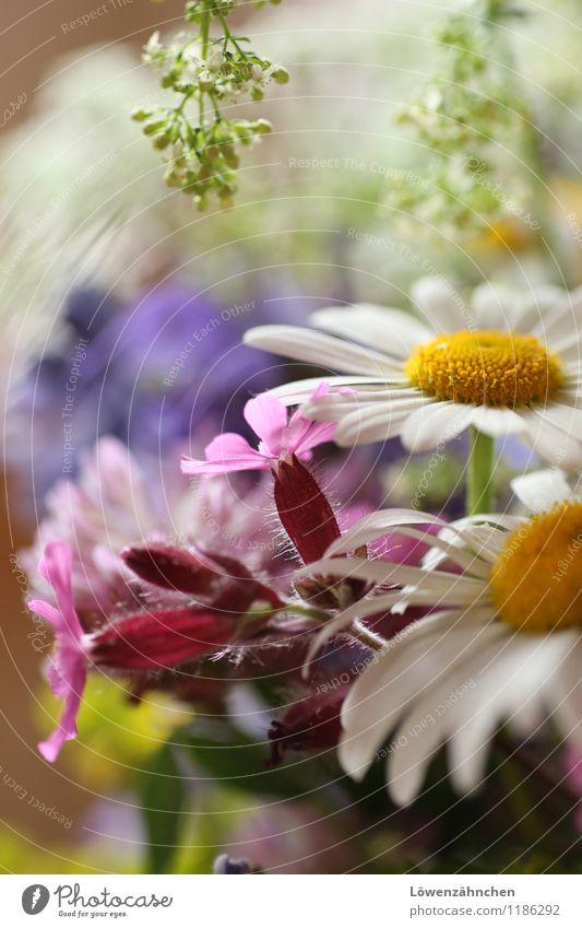 wedding details VIII Blume Blüte Margerite Lichtnelke Wiesenblume Blumenstrauß Fröhlichkeit klein natürlich schön blau mehrfarbig gelb grün rosa weiß Stimmung
