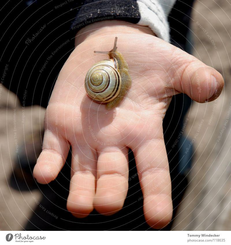 Schneckenflüstern Kind Mädchen Hand Kinderhand Finger untersuchen Neugier kümmern Schneckenhaus Fühler Tier Sonnenlicht Weinbergschnecken Schleim Schleimer