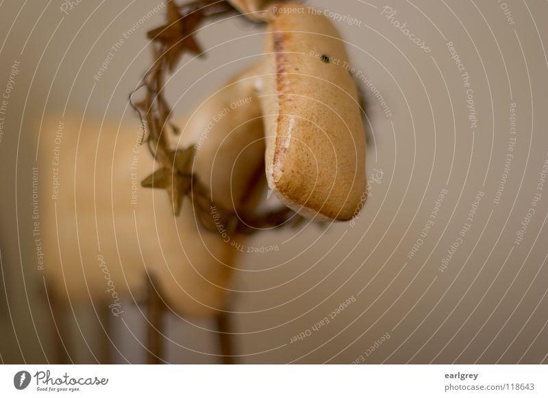 Elch - der Held Dekoration & Verzierung Kranz Physik heimelig Weihnachten & Advent Stern (Symbol) siegerkranz ehrenkranz Medaille ausgestopft Wärme ruhig