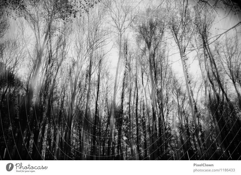 Apocalypse Natur Pflanze weiß Baum Einsamkeit Landschaft Blatt Tier dunkel Wald schwarz Stil Tod Holz Stimmung Park