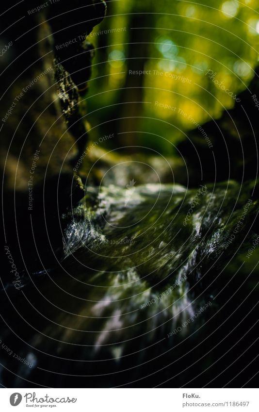 mächtig kleiner Bach Umwelt Natur Urelemente Erde Wasser Felsen Wellen Flussufer Wasserfall Flüssigkeit nass braun grün fließen Stein Bewegung Stromschnellen
