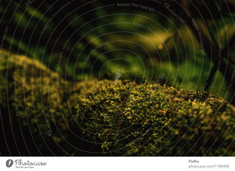 Moos über Moos Umwelt Natur Pflanze Urelemente Erde Regen Gras Grünpflanze nass natürlich grün feucht Moosteppich bewachsen Waldboden Boden grünen Farbfoto
