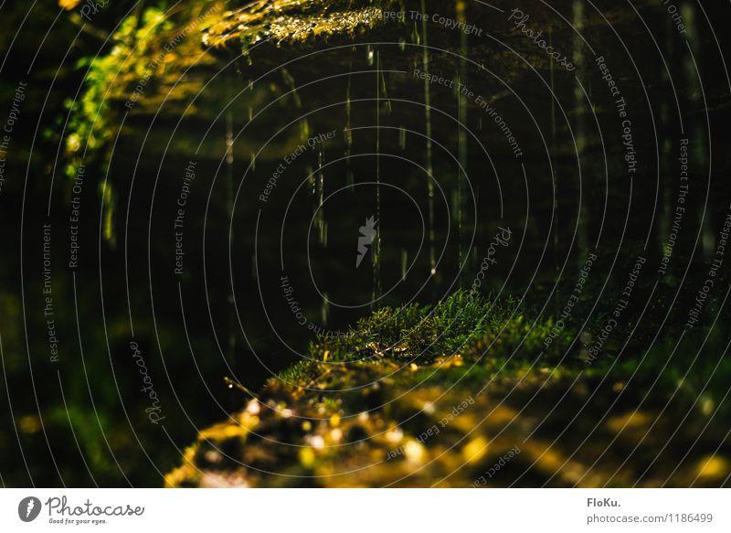 da fühlt sich das Moos wohl Umwelt Natur Pflanze Urelemente Erde Wasser Wassertropfen Klima Regen Gras Grünpflanze Wildpflanze Wald Urwald Wasserfall klein nass