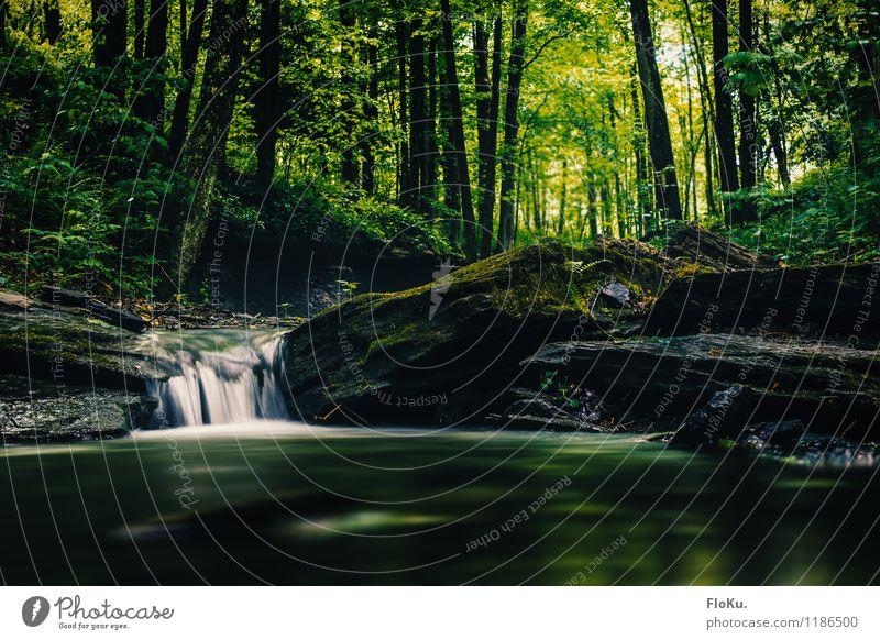 Bächlein im Park Umwelt Natur Landschaft Pflanze Urelemente Erde Wasser Baum Gras Moos Blatt Grünpflanze Wald Flussufer Bach Wasserfall nass natürlich grün