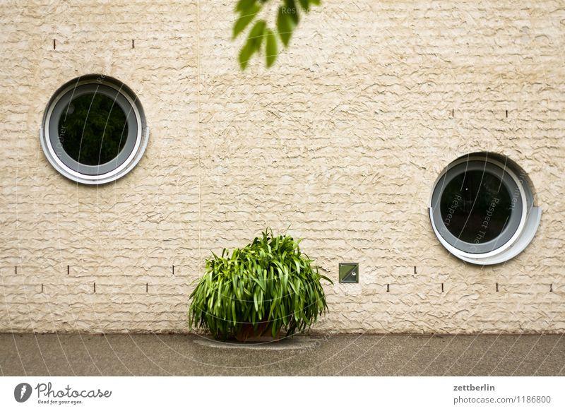Neo Rauch Haus Gebäude Fenster rund Bullauge Pflanze Grünpflanze Topfpflanze Orangerie Mauer Wand Textfreiraum Menschenleer Architektur modern Rundfenster