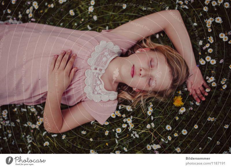 Mia & Daisies Mensch Kind Natur grün Sommer Erholung Blume ruhig Mädchen Wiese Gras feminin Garten rosa Park träumen