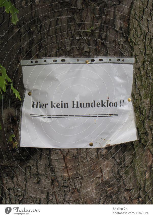 Hier kein Hundekloo!! Natur Stadt Pflanze weiß Baum schwarz Umwelt Gefühle braun Stimmung Ordnung Schriftzeichen Hinweisschild Kommunizieren einzigartig