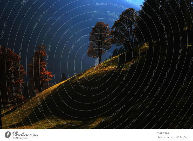 Druiden Hain Wald Baum Wiese Sonnenuntergang grün Herbst hellgrün braun Ocker Feld Hügel Wölbung Licht Blatt Berge u. Gebirge blau herbstlich orange Schatten