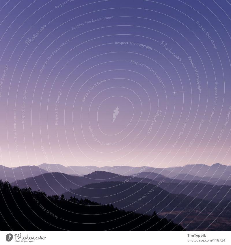 Pfälzer Kitsch Wald Hügel Baum Aussicht Abenddämmerung violett Rheinland-Pfalz Nebel Schatten Plattform Blick überblicken geheimnisvoll mystisch Landschaft