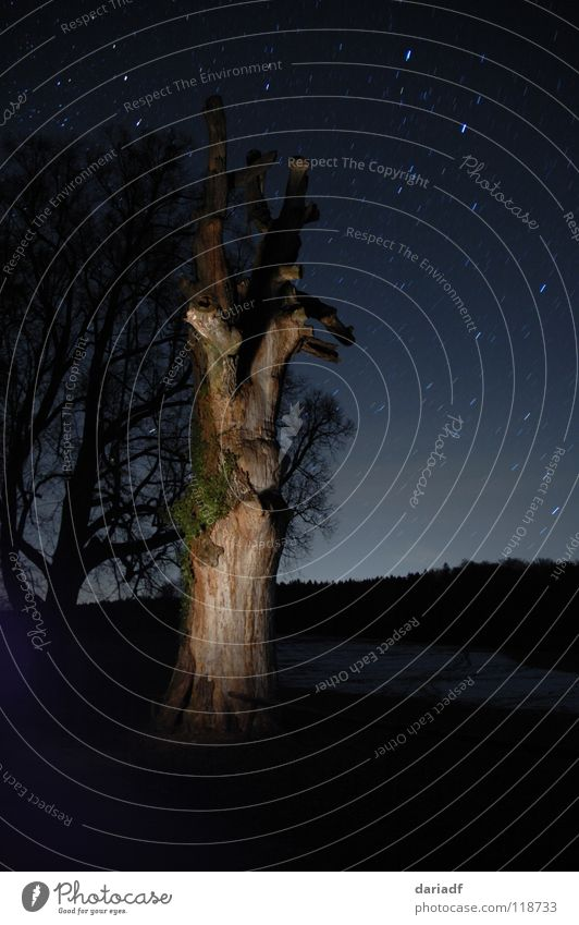 starstree Natur schön Himmel Baum blau ruhig Wald dunkel Landschaft Beleuchtung Feld Stern erleuchten Sternenhimmel Digitalkamera
