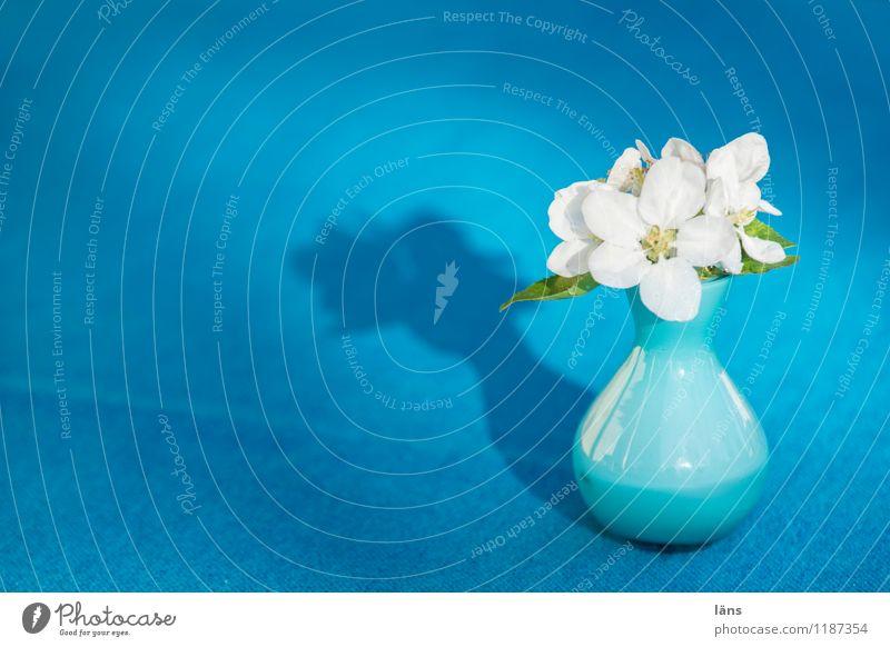 Apfelblüte Vase Blüte Blühend Blume blau Tisch Tischwäsche