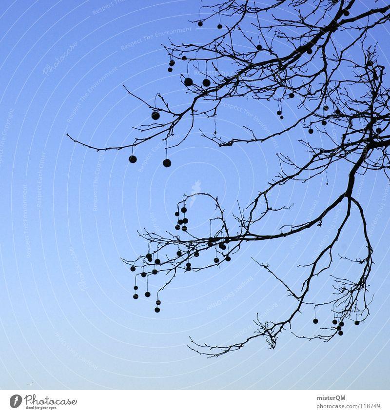 autumnal existence Herbst Winter Saison kalt dunkel Baum Verlauf Himmel himmlisch bedrohlich gefährlich Quadrat Rest letzte Vergänglichkeit Vergangenheit Zeit