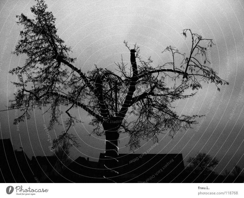 arme Dorflinde in Degersen ruhig Winter Kabel Himmel Wolken schlechtes Wetter Baum kalt klein Einsamkeit Tradition Linde armselig beschnitten Lichterkette