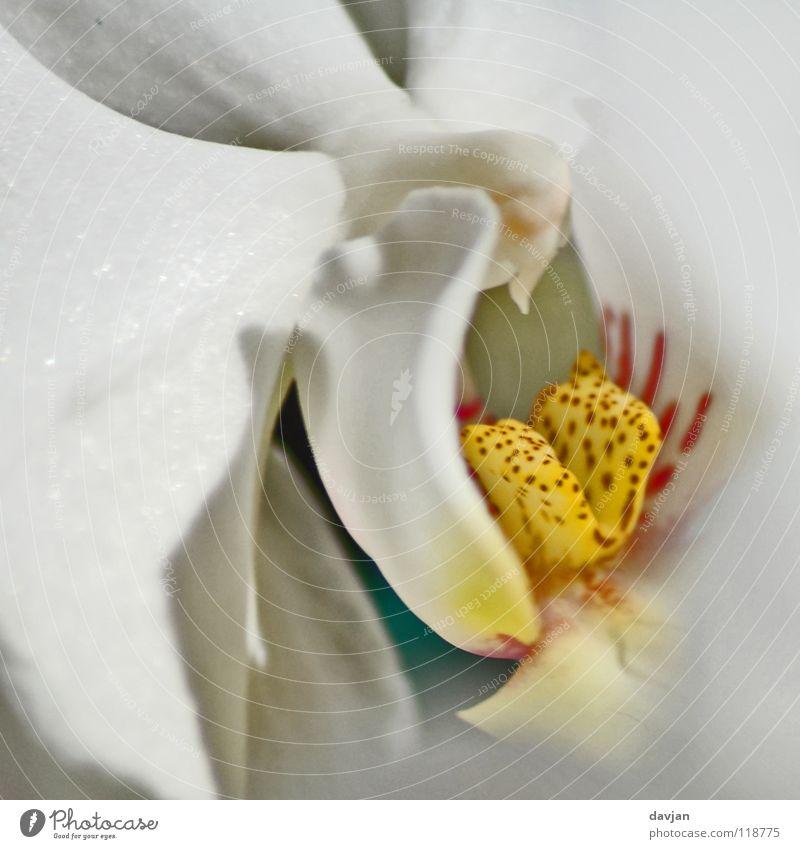 Orchidee Blüte Pflanze gelb rot weiß Unschärfe Makroaufnahme Nahaufnahme schön Blüttenblätter Farbe orange Detailaufnahme