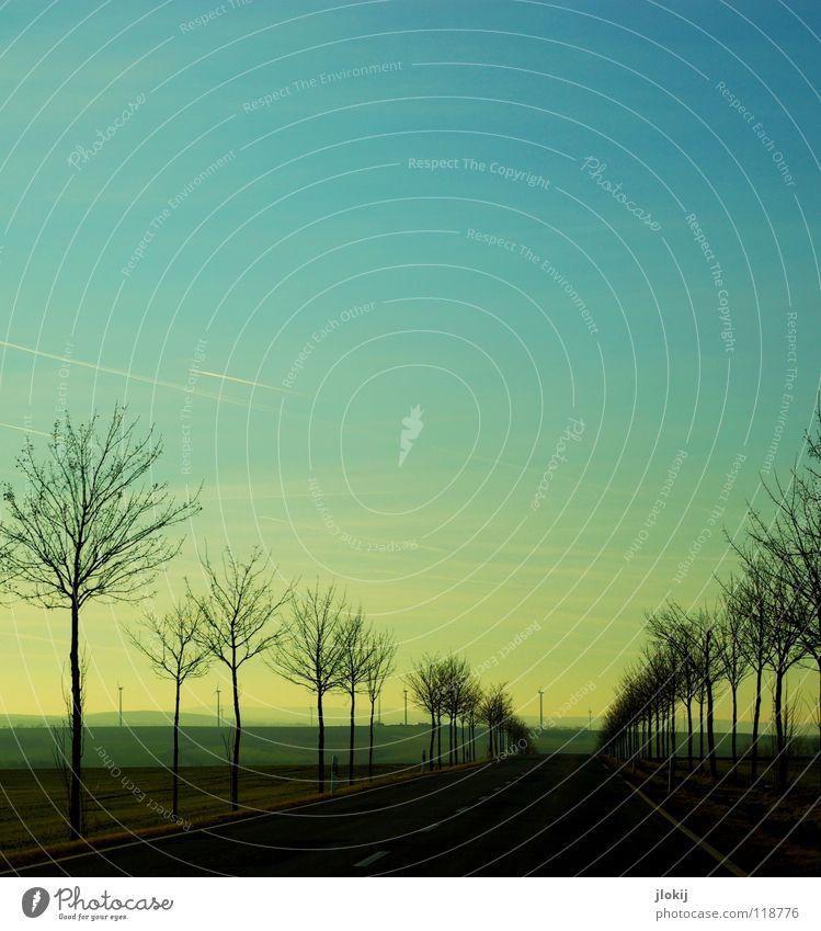 Unterwegs II Natur Himmel Baum Pflanze Winter Wolken Straße kalt Wege & Pfade Feld Beton Horizont fahren Asphalt Ast Reihe