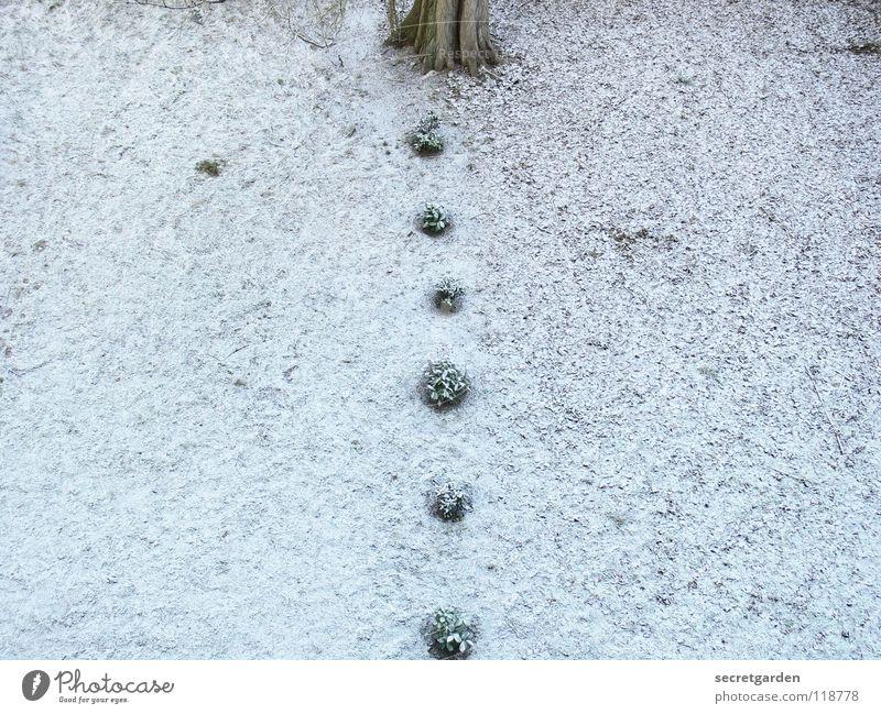 gartenarchitektur Kirsche Baum Winter Raum klein Beginn Lücke Genauigkeit trist Trauer Park Gras grün weiß braun verlieren Teilung Mitte Gärtner Langeweile