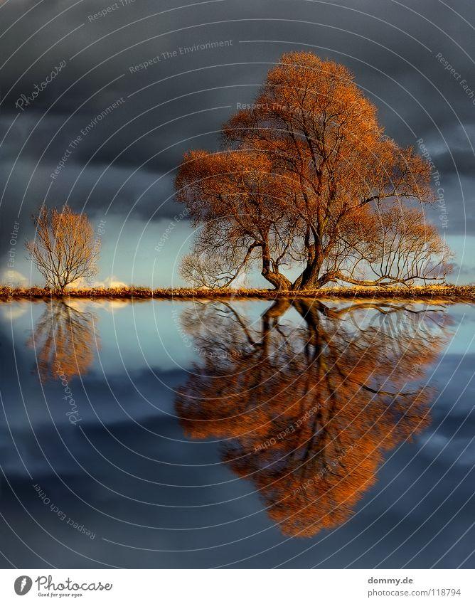 touch Baum Winter Herbst Reflexion & Spiegelung See laublos trocken Wolken Sträucher Flüssigkeit Holz Gabel Wasserspiegelung Pfütze HDR Himmel Fluss Bewegung