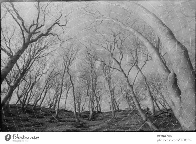 Jasmund, 1984 Wald Natur Froschperspektive stürzende linien Herbst Winter Frühling Baum Baumstamm Ast Zweig Himmel Wolkenloser Himmel Berge u. Gebirge Hügel