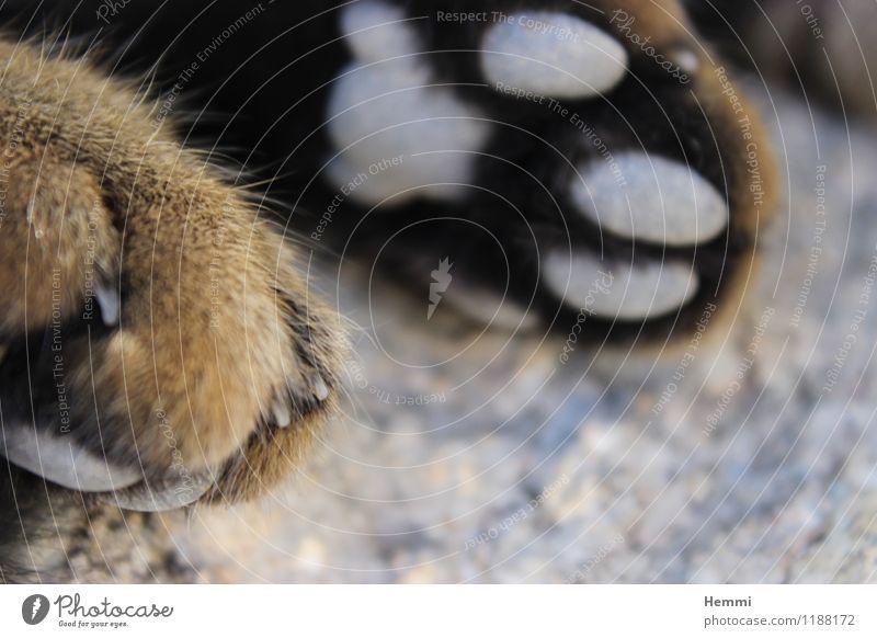 Katzen-Tatzen I Erholung Tier liegen genießen schlafen Haustier Hauskatze Pfote