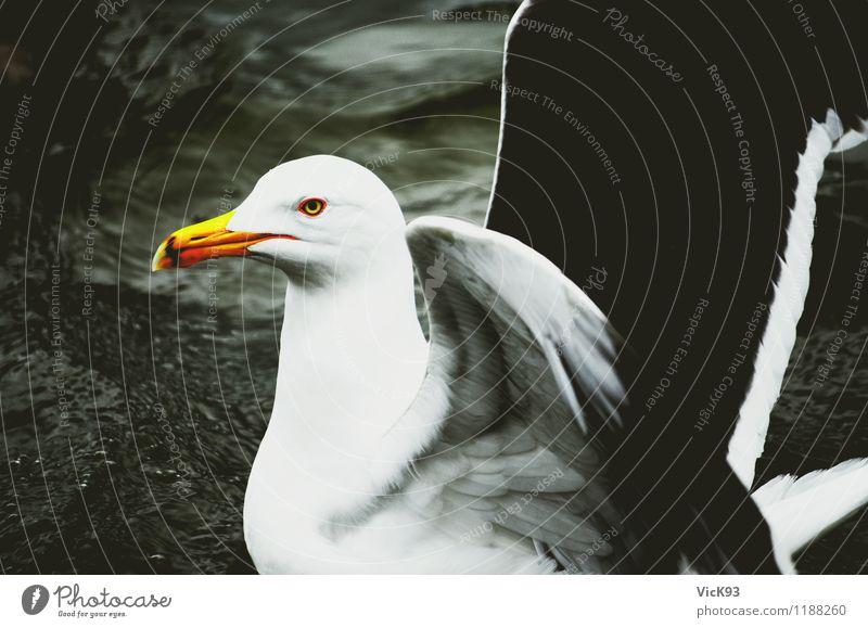 Möwe Umwelt Natur Tier Luft Wasser Insel See Wildtier Vogel Flügel Möwenvögel 1 Schwimmen & Baden fliegen Stolz Freiheit Leichtigkeit Farbfoto Außenaufnahme