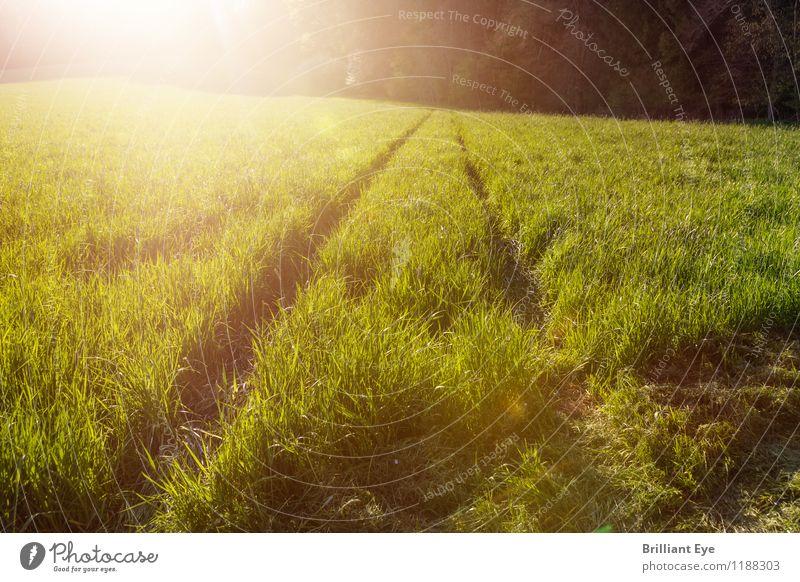 Hohes Gras im Sonnenlicht Natur Ferien & Urlaub & Reisen Pflanze grün Sommer ruhig Ferne Umwelt gelb Wärme Wiese Wege & Pfade Freiheit Linie Tourismus