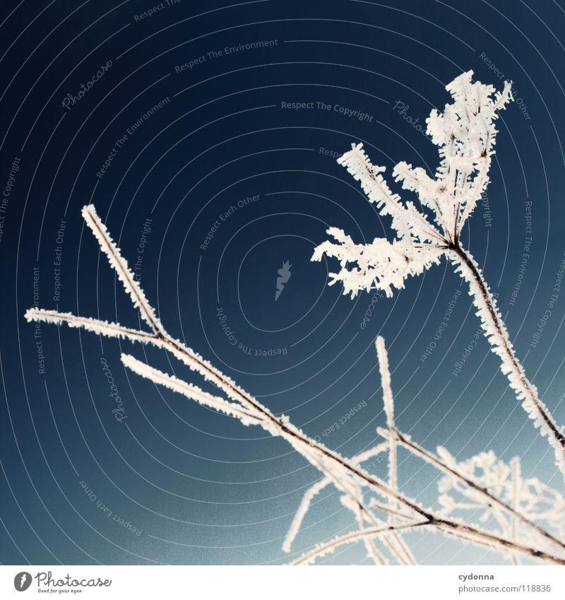 EISBLUME Winter kalt Einsamkeit ruhig gefroren Stimmung weiß Sehnsucht Erscheinung Unschärfe Tiefenschärfe Pflanze trocken Eisblumen Leben zugeschneit