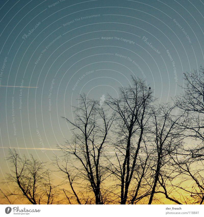 es wird morgen Himmel Baum blau gelb Herbst aufwachen Kondensstreifen