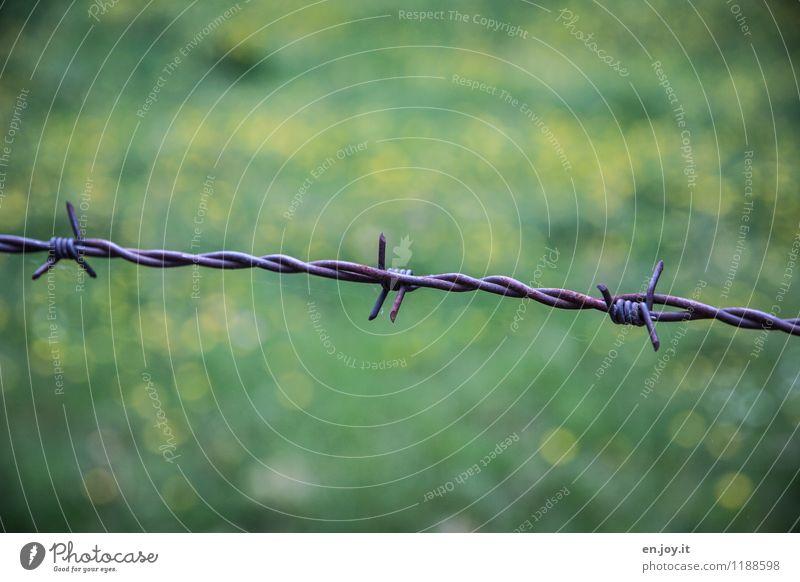 unerwünscht grün Sommer Einsamkeit Traurigkeit Frühling Wiese Gras Garten Freiheit Metall bedrohlich Schutz Hoffnung Sicherheit Trauer Sehnsucht