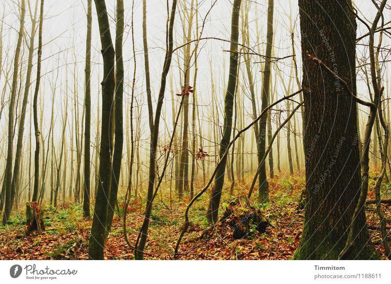 Es war einmal. Natur Pflanze grün schön weiß Baum ruhig Wald schwarz Umwelt gelb Herbst Gefühle natürlich braun Zufriedenheit