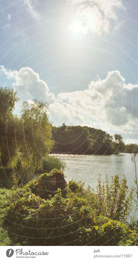 Wasser in Stralsund Natur Sonne Teich