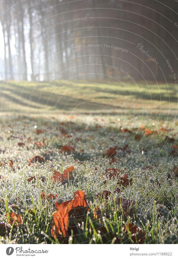 Boden- und Ackertag | Wald und Wiese Umwelt Natur Landschaft Pflanze Wassertropfen Herbst Eis Frost Baum Gras Blatt glänzend leuchten Wachstum ästhetisch