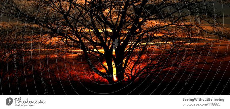 Brennender Himmel Baum Sonne rot dunkel Wärme Brand Ast Flamme Pflanze